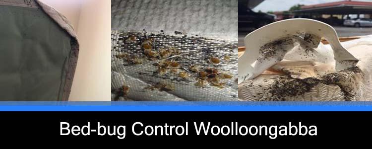 Bed Bug Control Woolloongabba